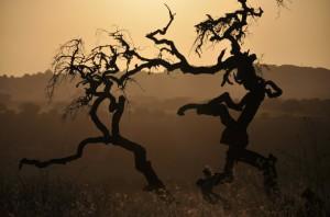 Dansende bomen in Het Wilde Nachtbos - inspiratie voor SamenDansen van 20 oktober 2013